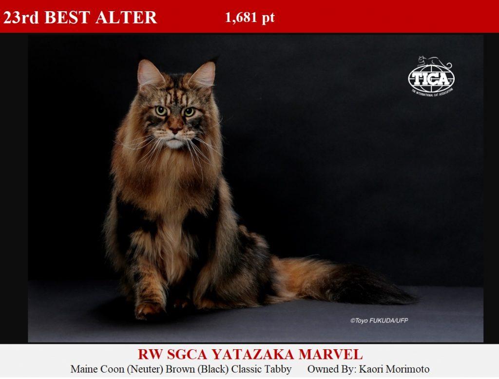 A23-HP_Yatazaka Marvel