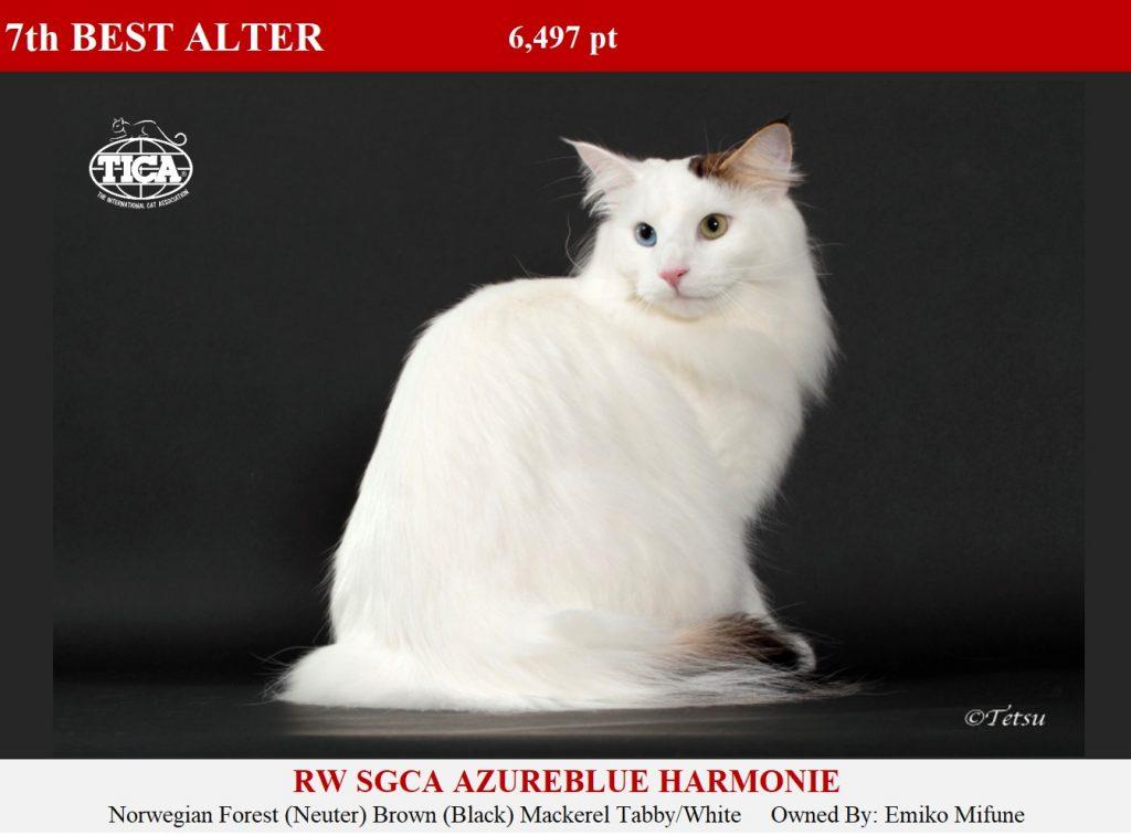 A7-HP_ Azureblue Harmonie