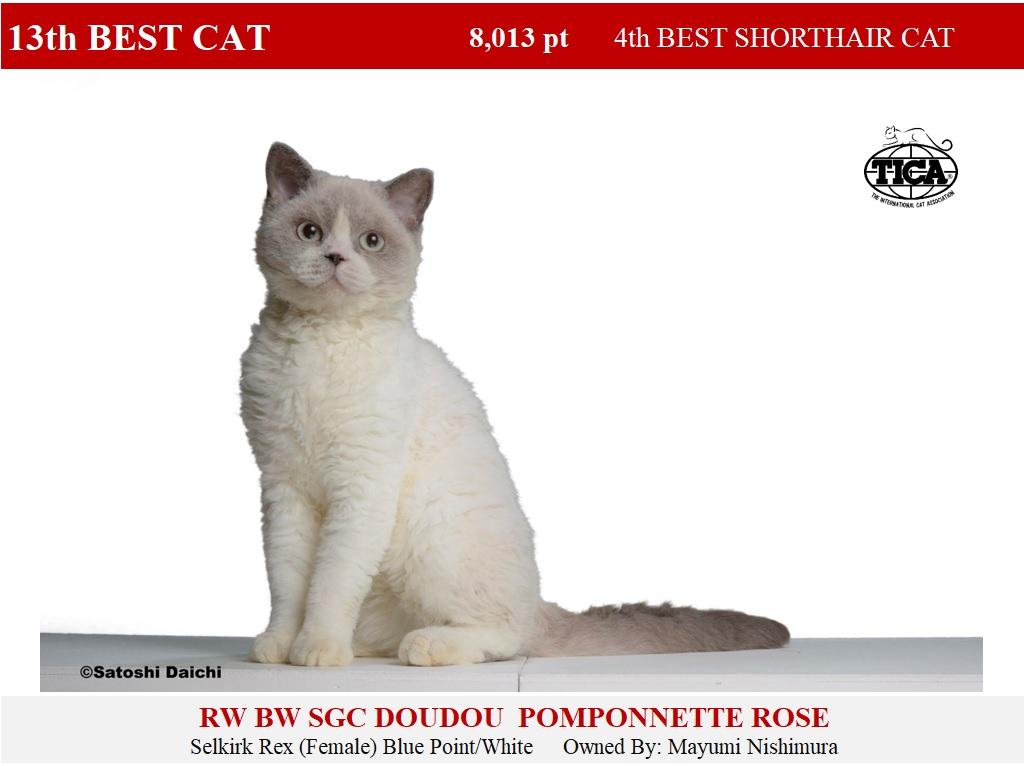 C13-HP_ Doudou Poponnette Rose