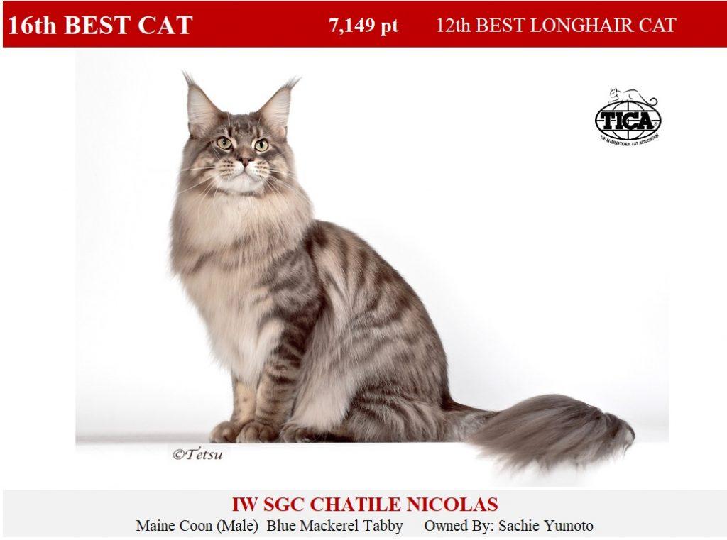 C16-HP_Chatile Nicolas