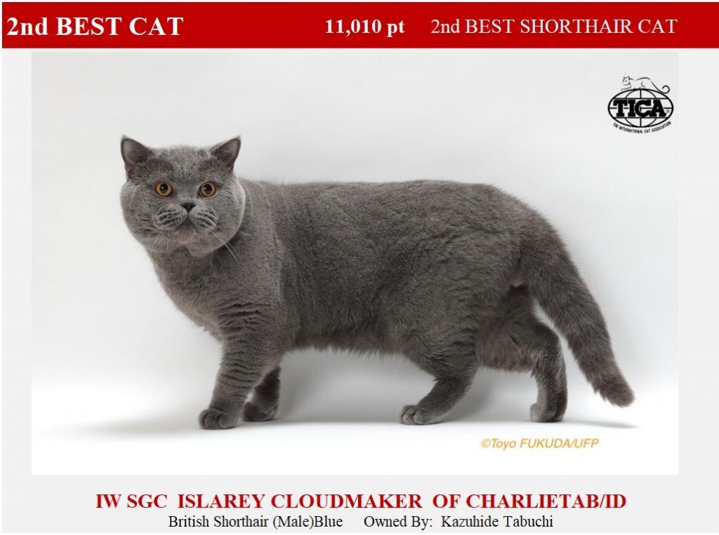 C2-HP_ Islarey cloudmaker of Charlietab