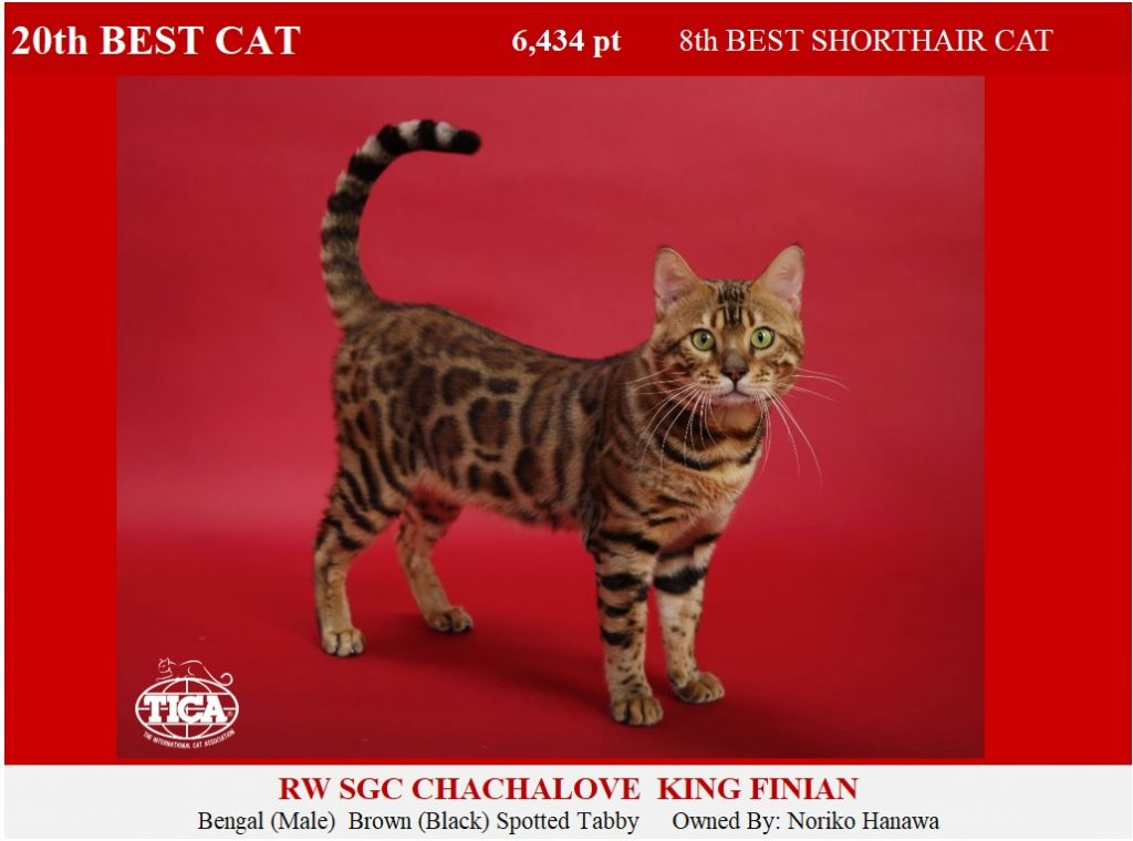 C20-HP_ Chachalove King Finian