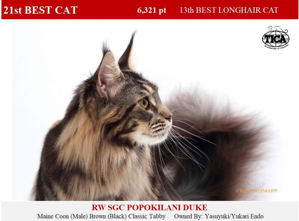 C21-HP_ Popokilani Duke