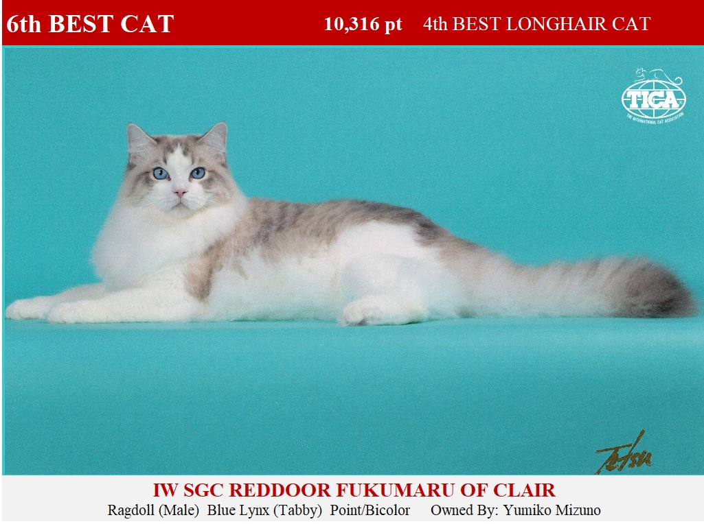 C6-HP_ Reddoor Fukumaru of Clair
