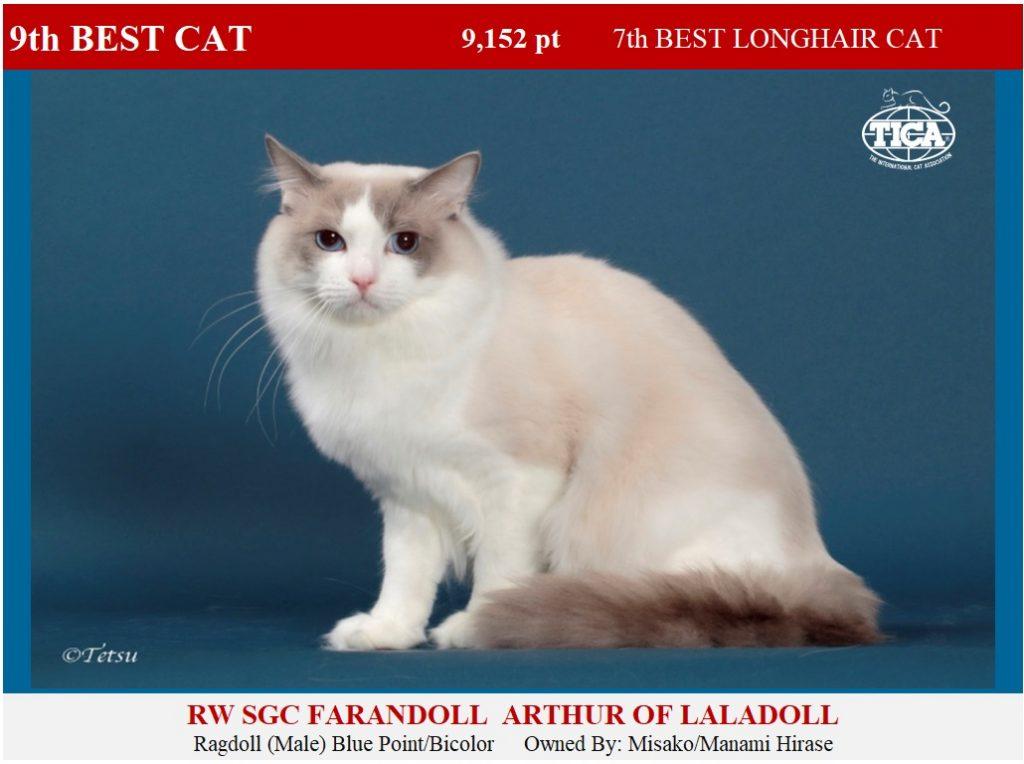 C9-HP_ Farandoll Arthur of Laladoll