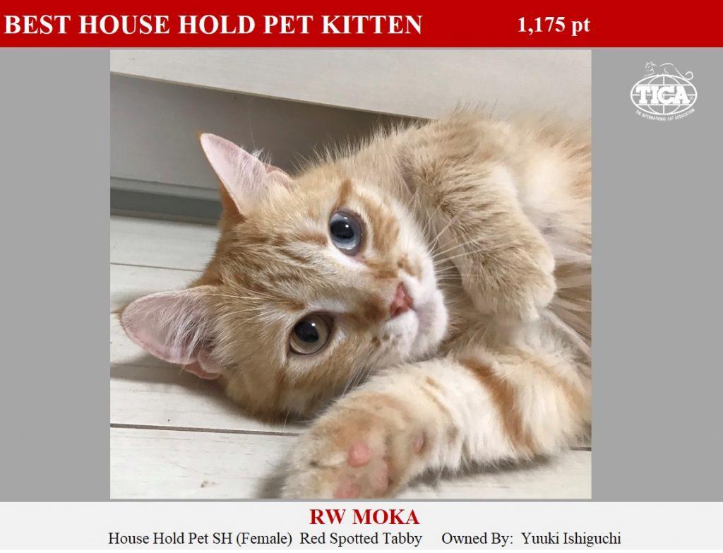 HHPK1-HP_ Moka