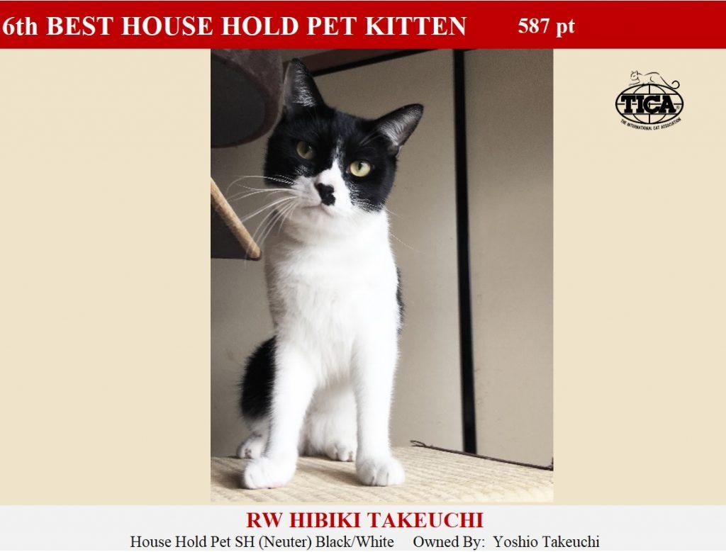 HHPK6-HP_ Hibiki Takeuchi