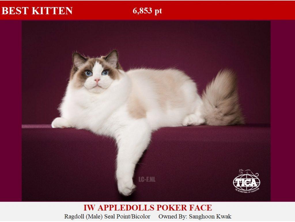 1-HP_ Appledolls Poker Face