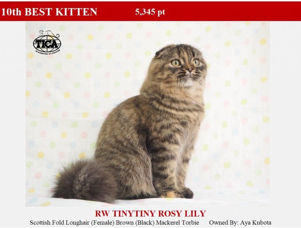 K10-HP_ Tinytiny Rosy Lily
