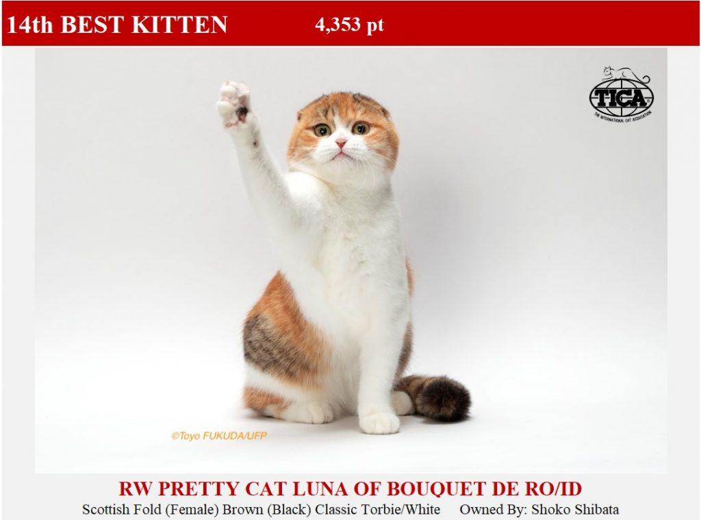 K14-HP_ Pritty Cat Luna of Bouquet de Rose