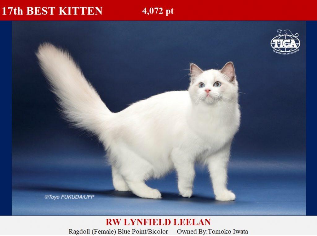 K17-HP_ Lynfield Leelan