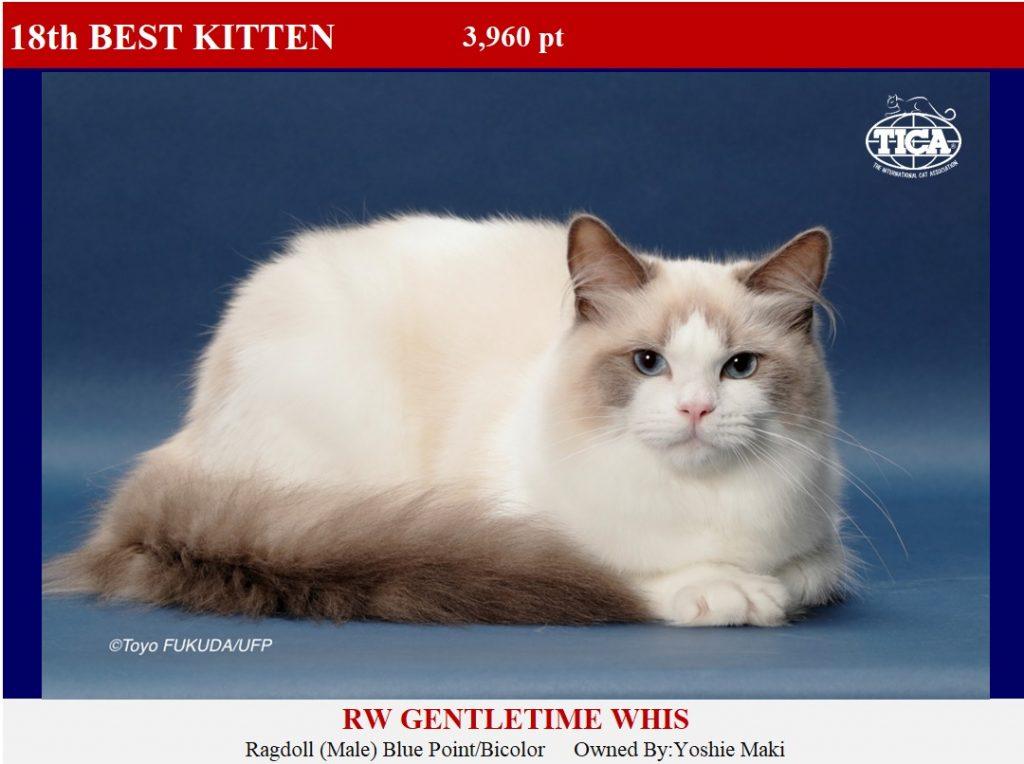 K18-HP_ Gentletime Whis