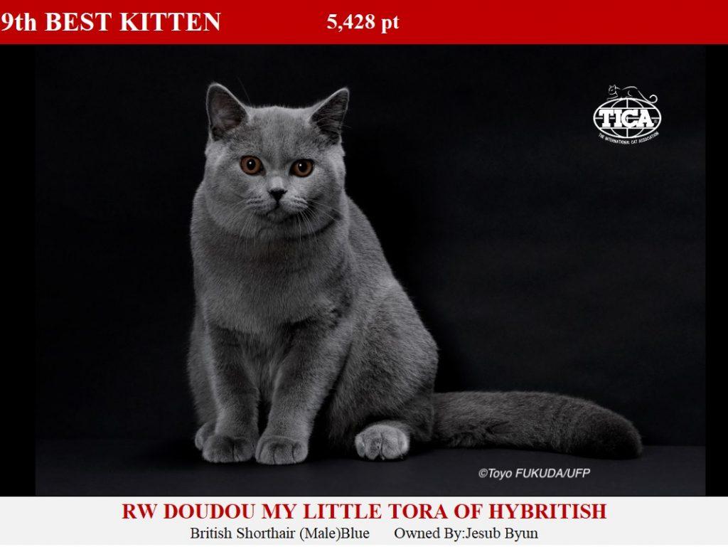 K9-HP_ Doudou My Little Tora of Hybritish