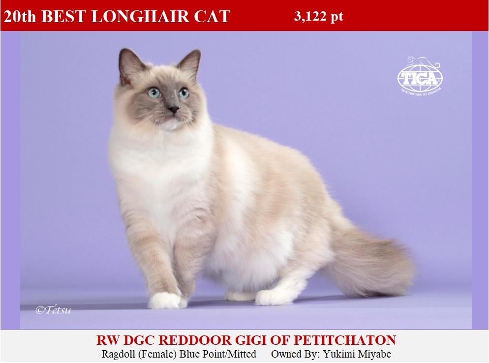 LHC20-HP_ Reddoor Gigi of Petitchaton