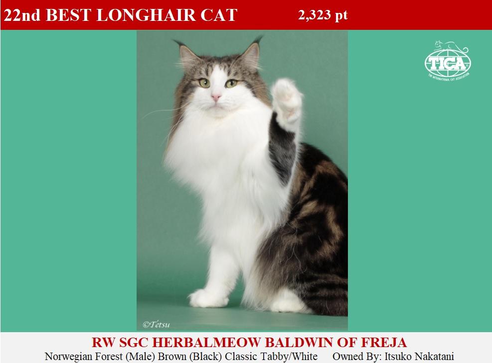LHC22-HP_ Herbalmeow Baldwin of Freja