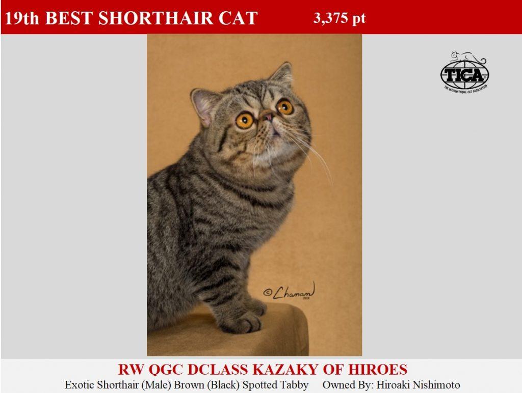 SHC19-HP_ Dclass Kazaky of Hiroes