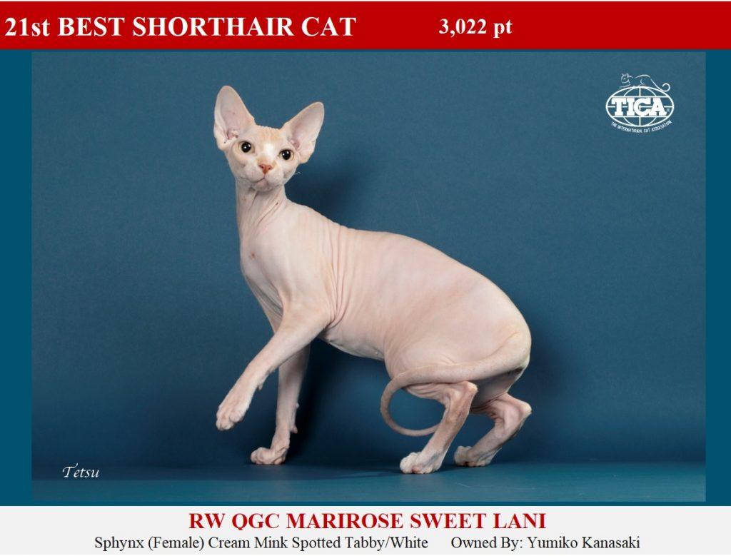 SHC21-HP_ Marirose Sweet Lani