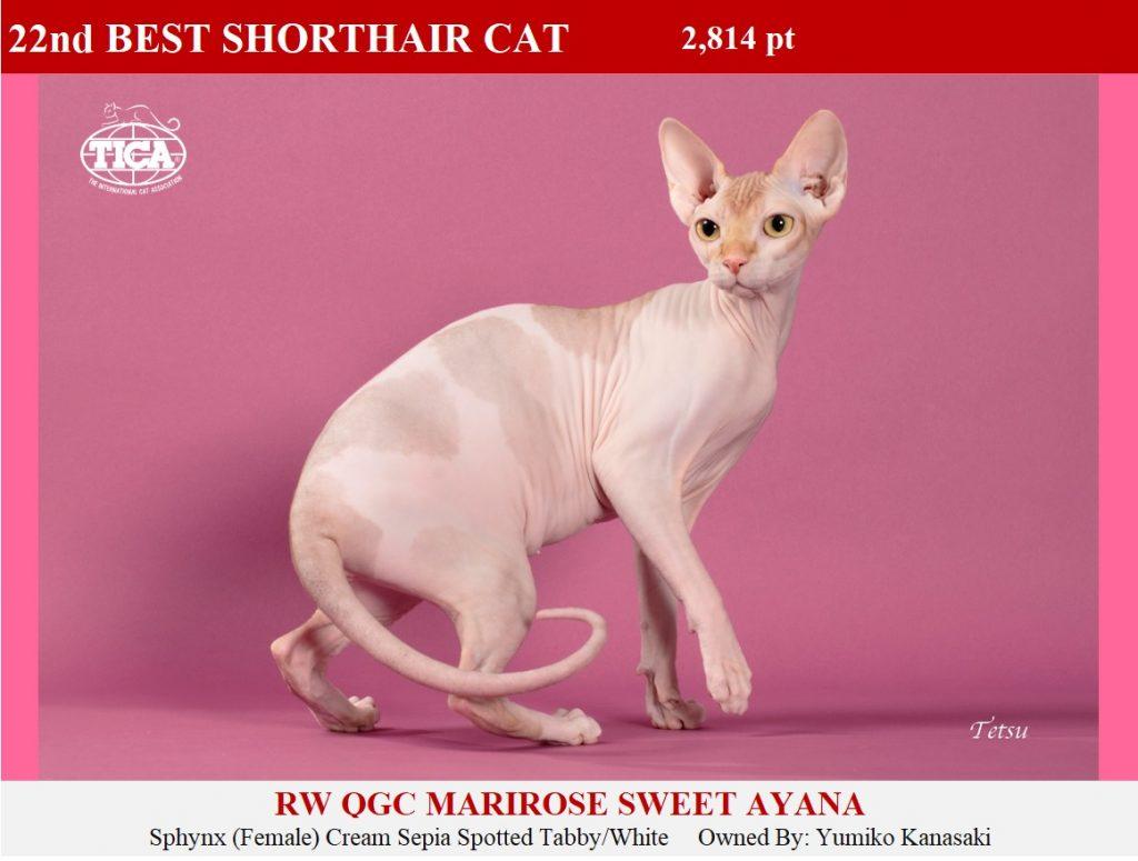 SHC22-HP_ Marirose Sweet Ayana